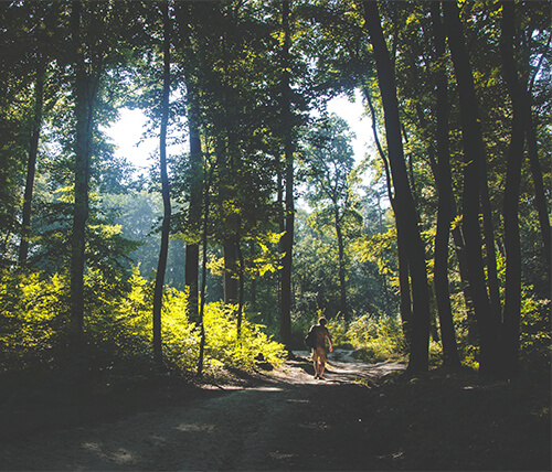Explore the Best Trails Around Mountainview Heights