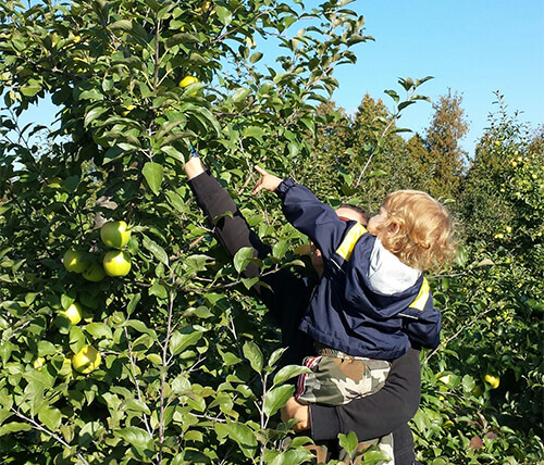 Greenpark Communities GTA Apple Picking Guide