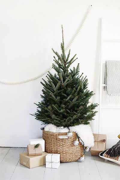 Go small when choosing your tree